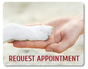 Request Appointment button. Background picture is a dog putting his paw in a human hand
